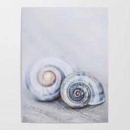 Blue Shells on white washed wood  pastel blues Poster