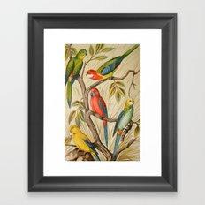 Vintage parrots Framed Art Print