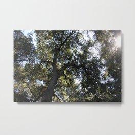 Tree of light Metal Print