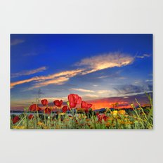 Poppies at sunset Canvas Print