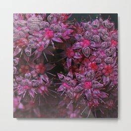 Amazing pink Flowers Metal Print