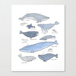 Whales Dolphins & Porpoises Canvas Print