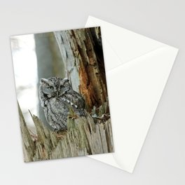 Adult male screech owl Stationery Cards