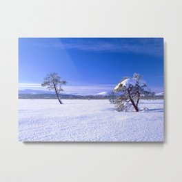 Winter landscape with two trees and clear blue sky Metal Print
