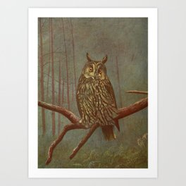 Vintage Illustration of an Owl (1902) Art Print
