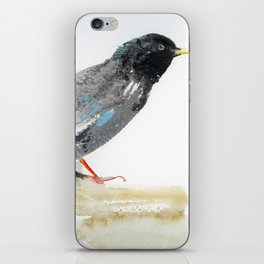 Australian Starling iPhone Skin
