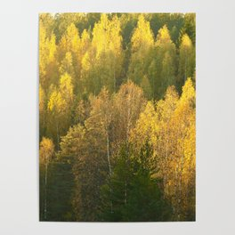 Forest In Sunset Tones Poster