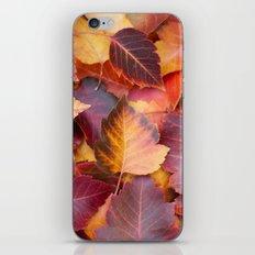 Autumn's Carpet iPhone & iPod Skin