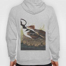 Hooded merganser save for web v, Birds of America, Audubon Plate 232 Hoody