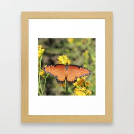 Queen Butterfly on Rubber Rabbitbrush in Claremont CA Framed Art Print