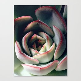 compact Canvas Print