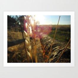 Sun Gazing Wheat Art Print