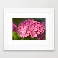 hydrangea Framed Art Prints featuring Hydrangea by Susann Mielke