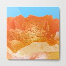 250  - orange peachy rose Metal Print