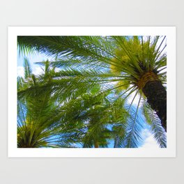 Dreamy Palms of Hawaii Art Print