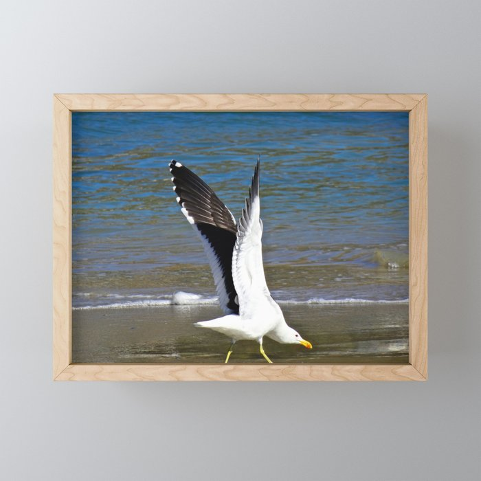 Jeffy Seagull Framed Mini Art Print