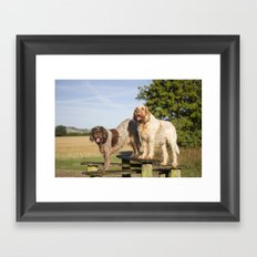 Italian Spinoni Dogs Woody & Ruben Framed Art Print