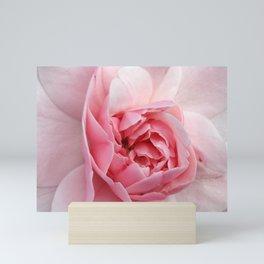 Pink Rose Mini Art Print