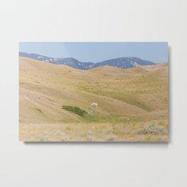 Room to Roam - Horse Photography Metal Print