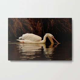 Wildlife in the lake: eating time Metal Print