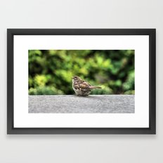 Little Feather Tasting Framed Art Print