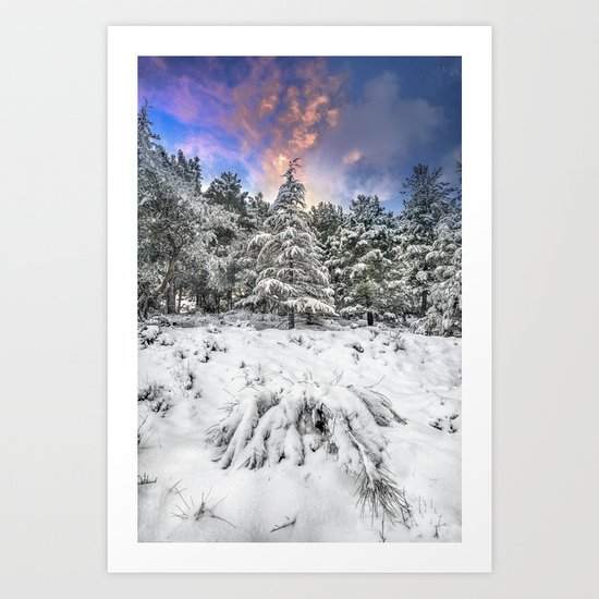 """""""Mountain Light IV"""" Snowy Forest At Sunset Art Print"""