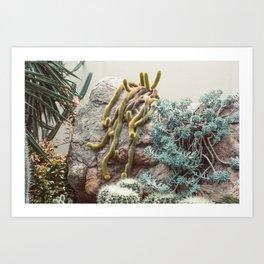 Botanical Gardens II - Cacti #995 Art Print