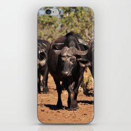 Cape Buffalo. iPhone Skin