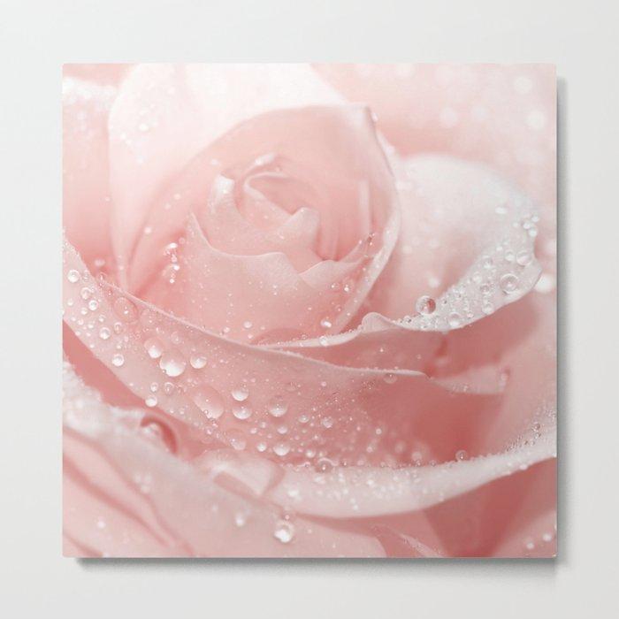 Rose 96 Metal Print