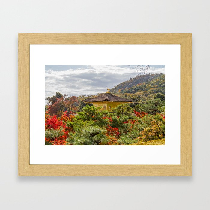 Fall Colors and Gold Framed Art Print