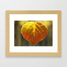 Fall Aspen Framed Art Print