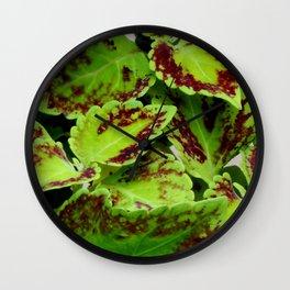 Coleus plants#2 Wall Clock