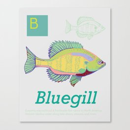 B is for Bluegill, Southeastern ABC's Canvas Print