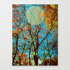 trees - teza Canvas Print