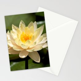 Longwood Gardens - Spring Series 281 Stationery Cards