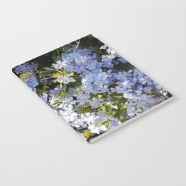 a violet flower in the heart of Athens Notebook