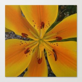 Perfect Lily Canvas Print
