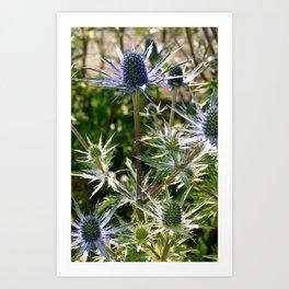Blue Flowers in the Sun Art Print