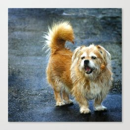 Small dog on the street Canvas Print