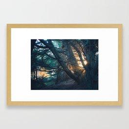 Sunset in the Trees Framed Art Print