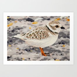 Piping Plover Art Print