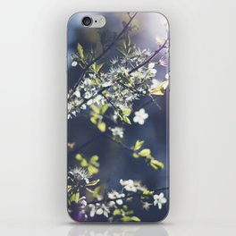 Backlight Blossoms iPhone Skin