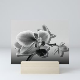 Orchid in Black and White Contemporary Art A537 Mini Art Print