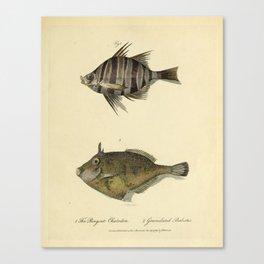 Fish by Sarah Stone, 1790 Canvas Print