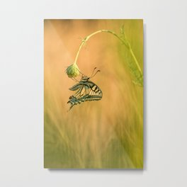 Papilio machaon Metal Print