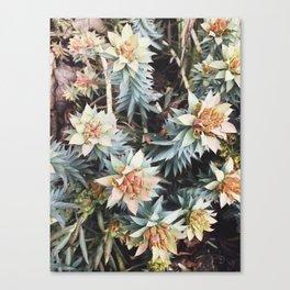 orange succulent Canvas Print