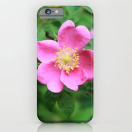 A Very Pink Wild Rose iPhone Case