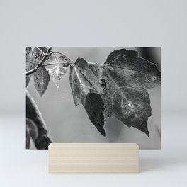 Details of Nature  Mini Art Print