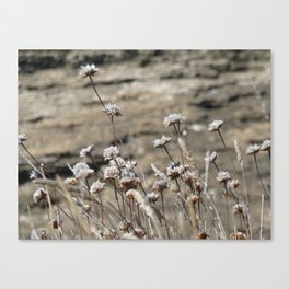 wildflowers seaside in pearl color Canvas Print