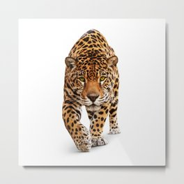 Jaguar - front view, isolated on white Metal Print